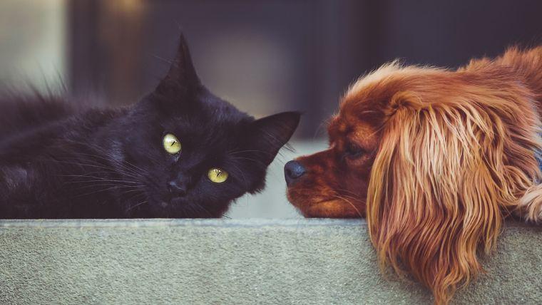 【悩み解決】ペットがいるけどホームセキュリティを設置したいあなたへ